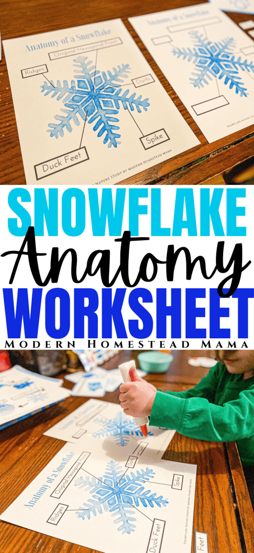 Anatomy of a Snowflake Worksheet | Modern Homestead Mama