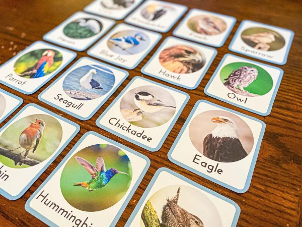 Realistic Montessori Bird Flashcards
