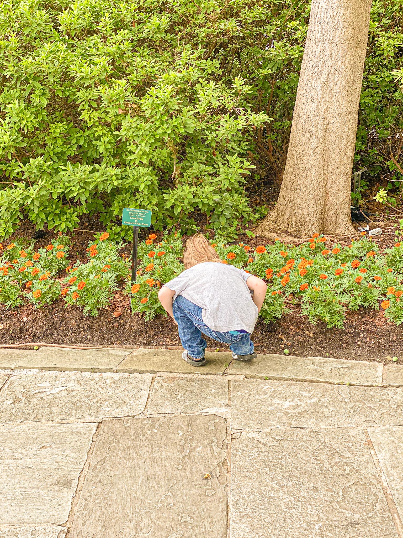 Dallas Arboretum Garden Walk