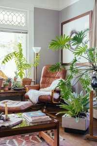Decorating with Plants - Modernize