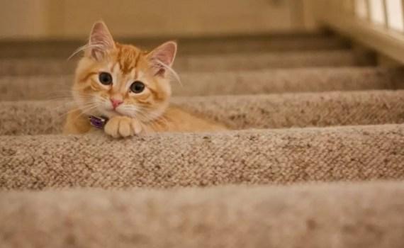 Best Vacuum For Cat Litter
