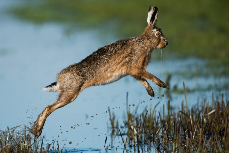 """To ride as a hare"", local sayings from around the world"