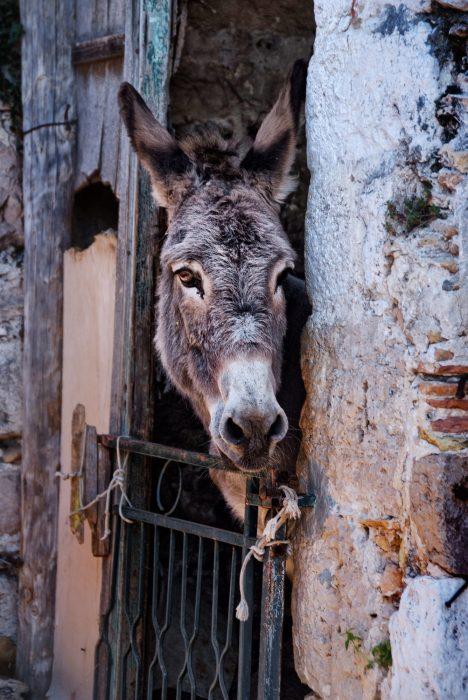 A Donkey in Mljet, Croatia