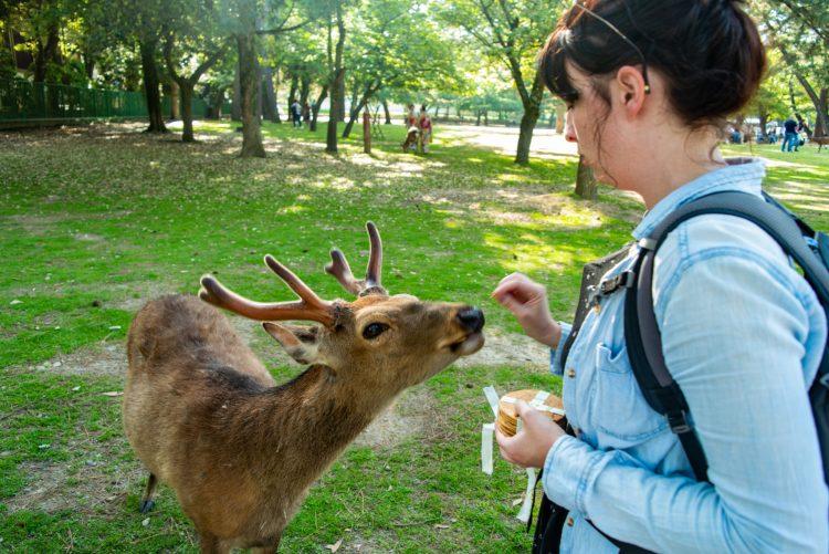 Feeding Deer in Nara, Japan