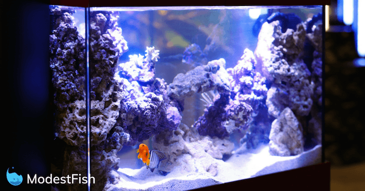 best aquarium led lighting reviewed 2021