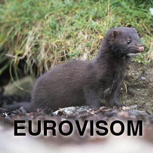 Eurovisom