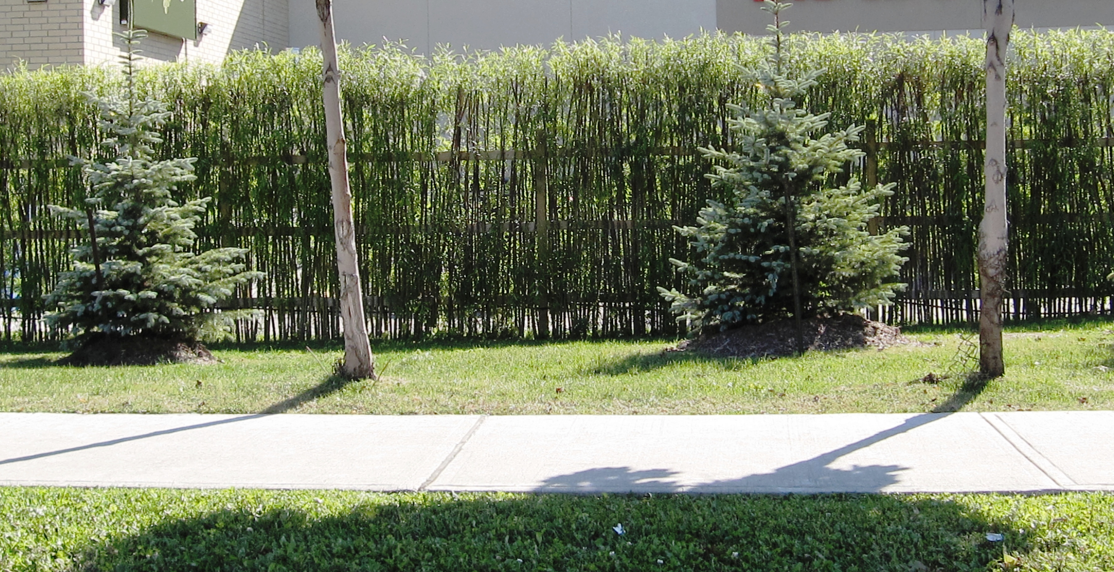 Genial Live Bamboo Privacy Fence Ideas
