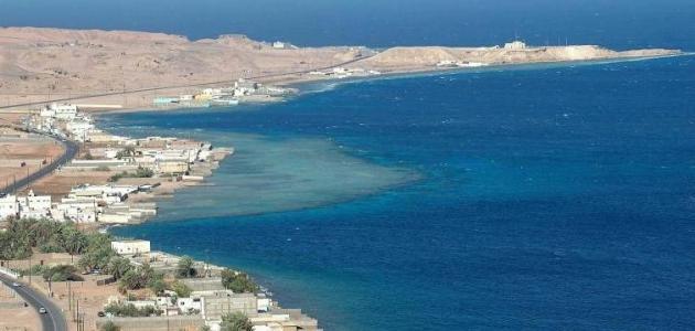 ساحل البحر الأحمر موضوع