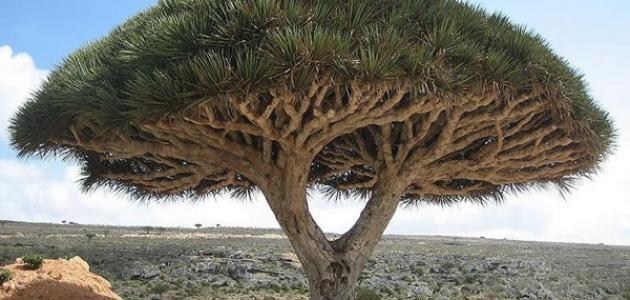 أنواع الأشجار موضوع