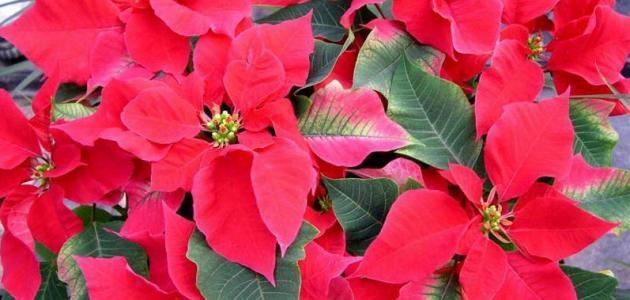 أنواع نباتات الزينة موضوع