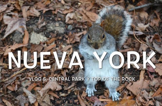 central park, nueva york, ardilla, top of the rock,