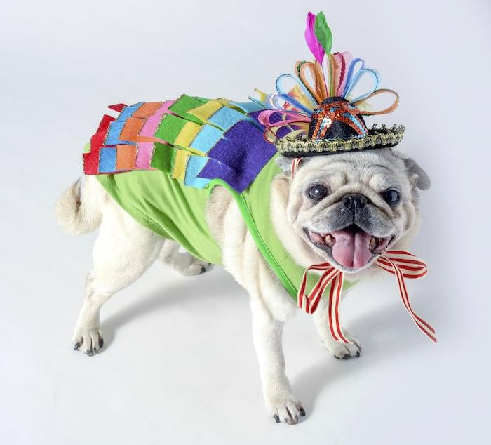 Dog Halloween costume: sparkly piata