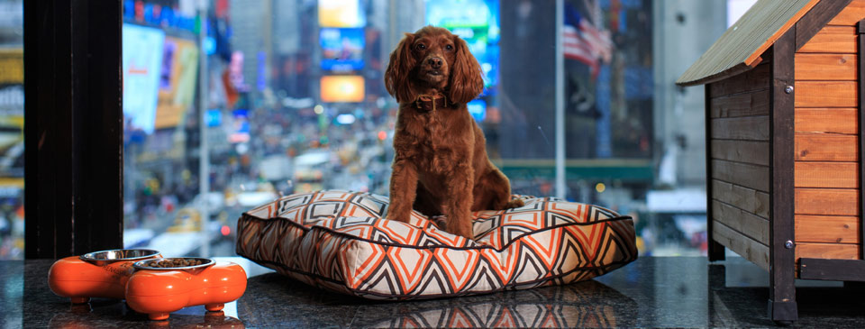 Pet Friendly Hotel Nyc Renaissance New York Times Square Hotel