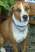 Louie - Office Dog