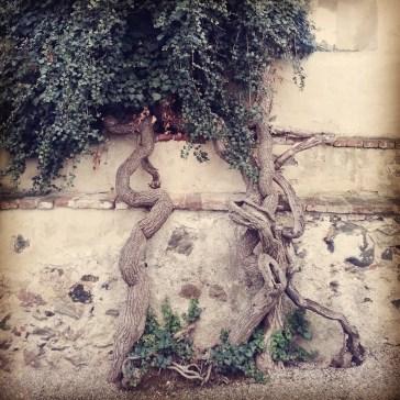 old tree in a castle