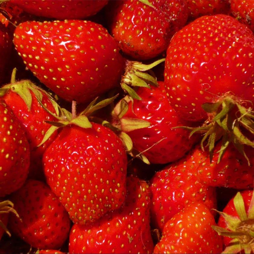 jordbær sonata