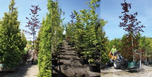 XL træer