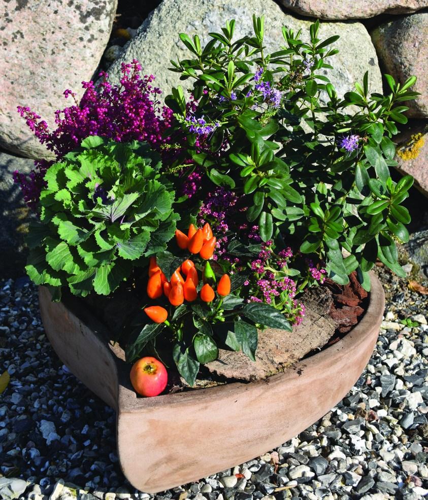 sammenplantning med farvestrålende efterårsplanter