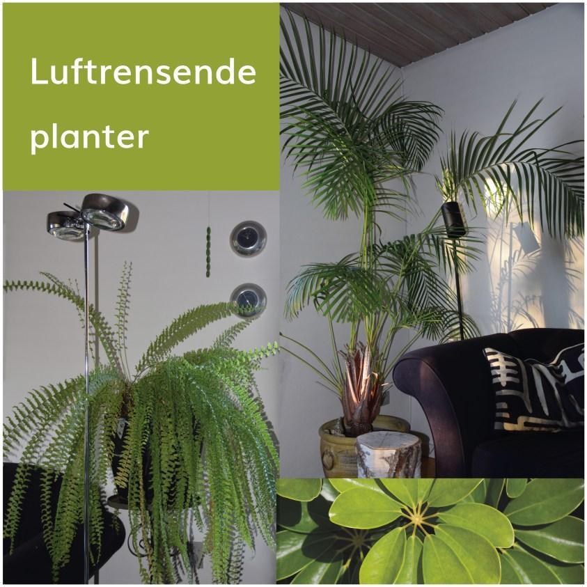 luftrensende planter
