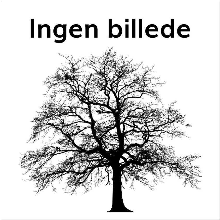 Salix Viminales Båndpil hæk