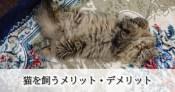 猫を飼うメリット・デメリット