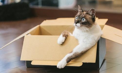 Amazon 箱詰め