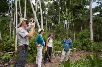nature walk in the Peruvian Amazonica jungle