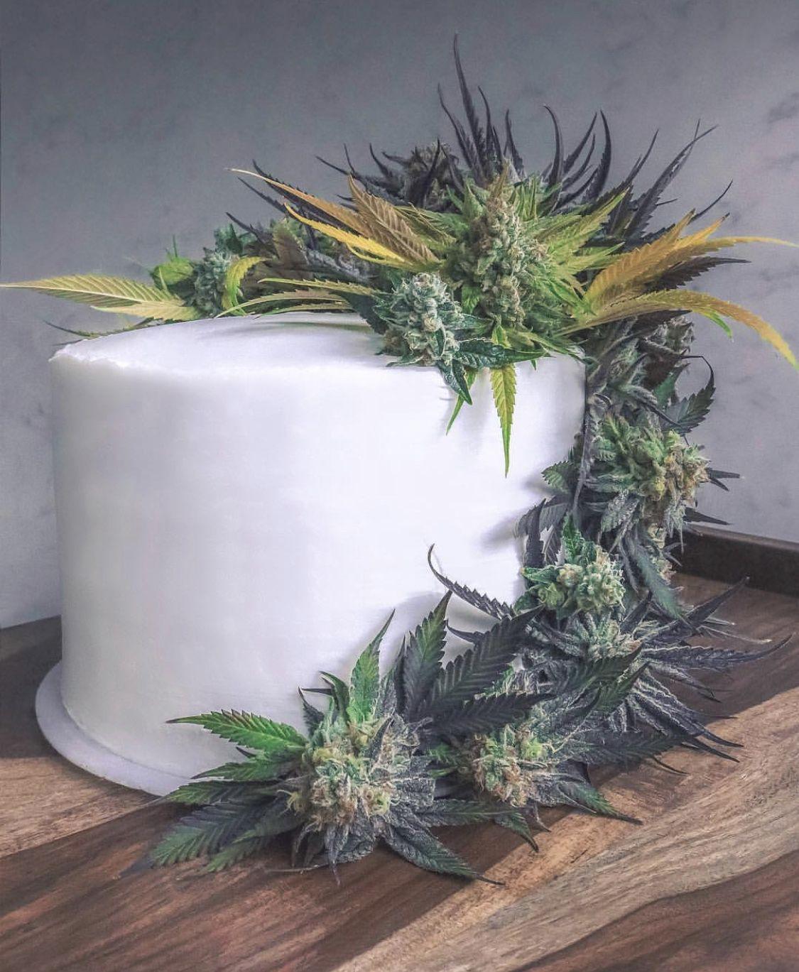 Strain Profile Wedding Cake Greenway Magazine