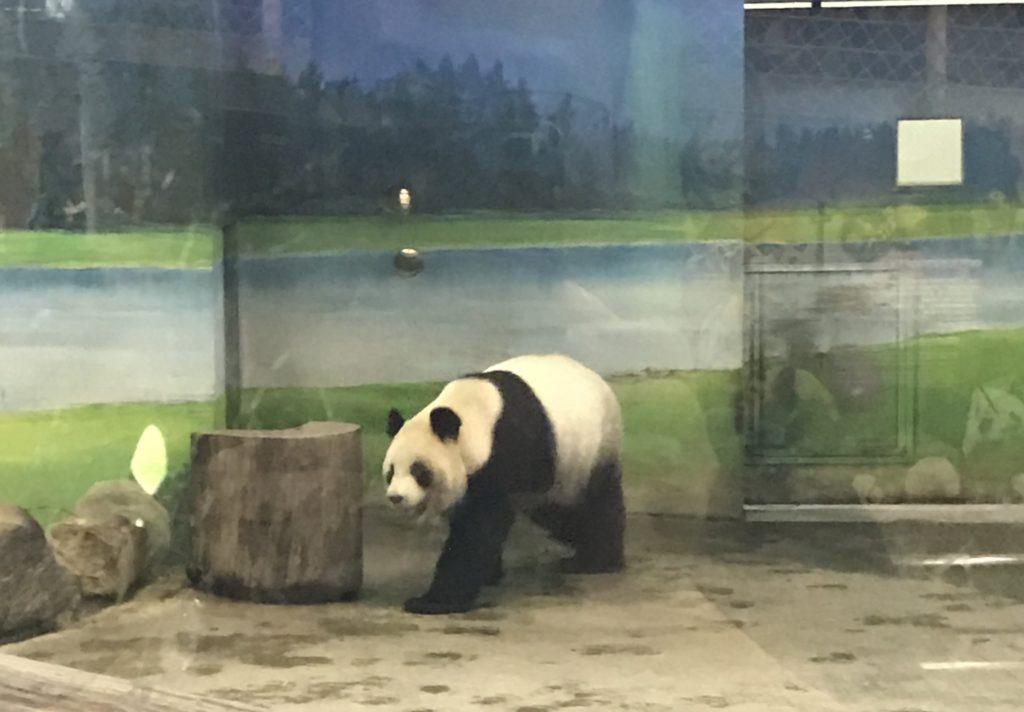 台北動物園-パンダ