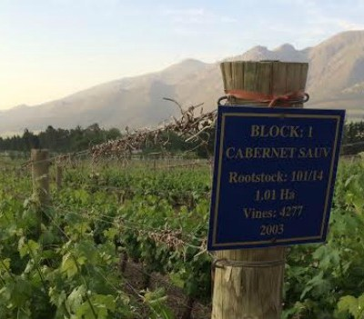 SA Wine Markets