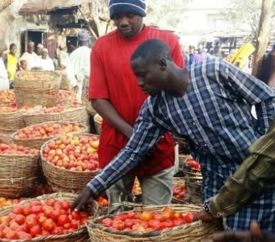 Nigerian Tomato Emergency