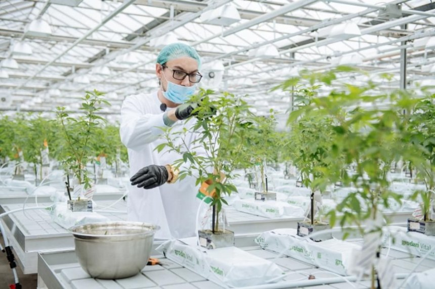 Weed Economy