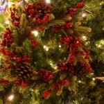 クリスマスツリー 本物 モミの木 販売 手入れ レンタル