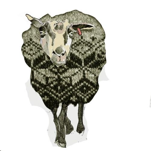 shetland-ewe