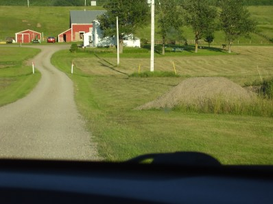The long driveway to the farmhouse behind the tree. The barn was behind the Guest House.