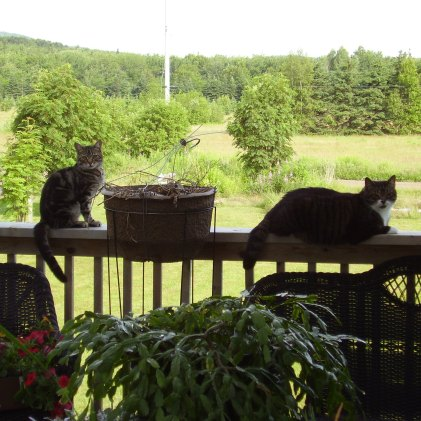 Rory on the left, and Prince is on the right. I think they were watching the hummingbirds.