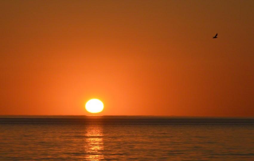 glenelg 16-kitsch sunset w bird2019