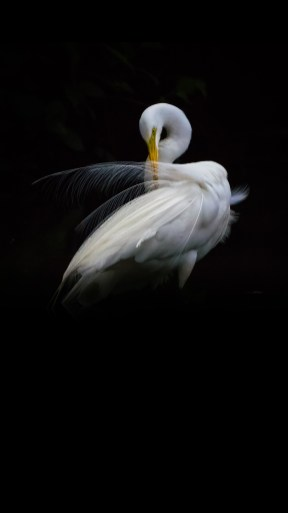 ZTE-Axon-7-Stock-QHD-Wallpapers-Mohamedovic-Preen-Plumage