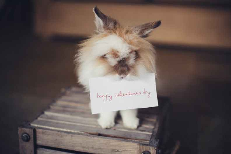 Best-Valentine's-Day-Wallpapers-2019-Mohamedovic-25