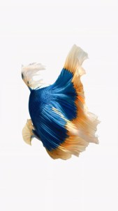 iPhone Blue Orange Fish Live Wallpaper 03