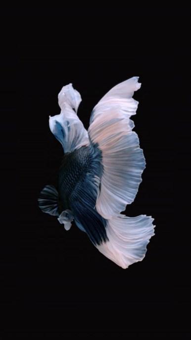 iPhone-Blue-White-Fish-Live-Wallpaper-05