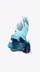 iPhone Light Blue Fish Live Wallpaper 02