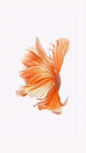 iPhone Orange Fish Live Wallpaper 01