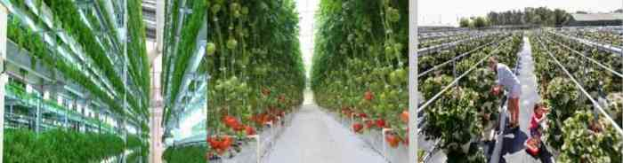 الزراعة المائية ٥
