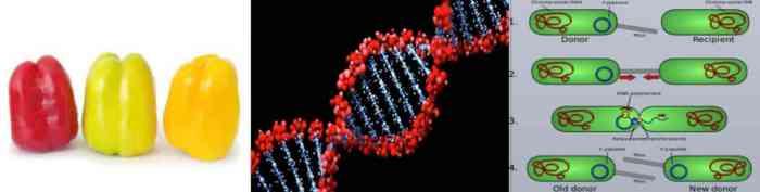 الوراثية ٥
