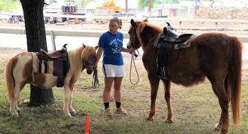Dream Ponies & Petting Zoo