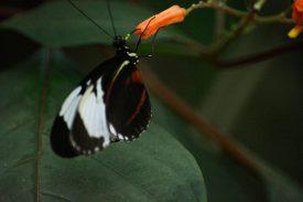 Butterfly Kopenhagen Zoo