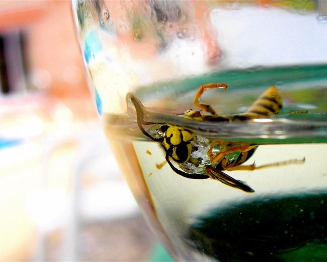 Thomas Cabus: Wasp & Martini Laroque, France 2006