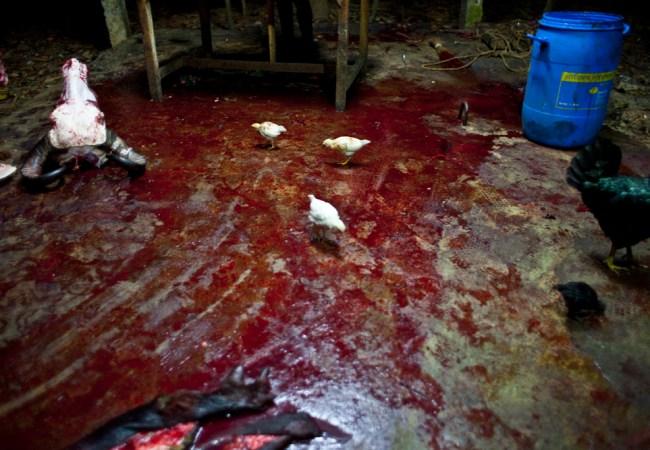 Unnikrishnan Raveendranathan : Blood Money #26