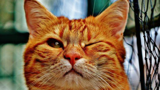 Regarder des vidéos de chats, ce n'est pas débile !